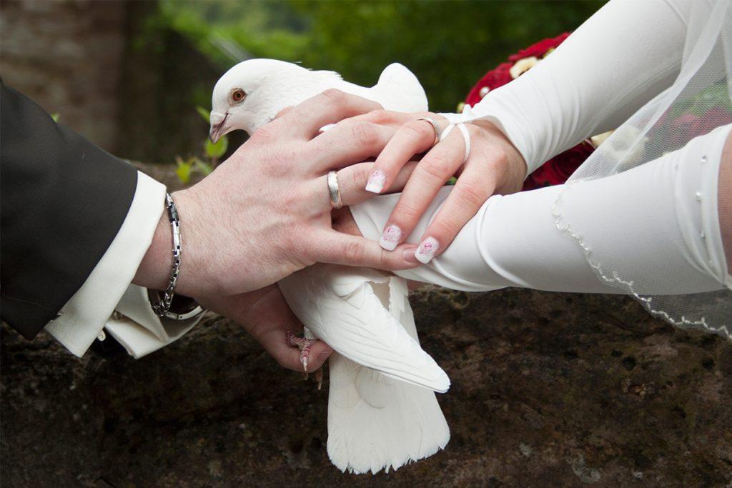 Eine Hochzeitstaube