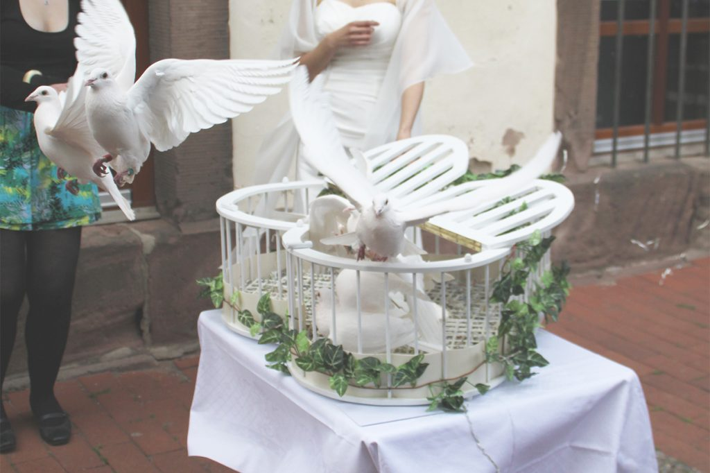 Tauben starten aus ihrem Nest